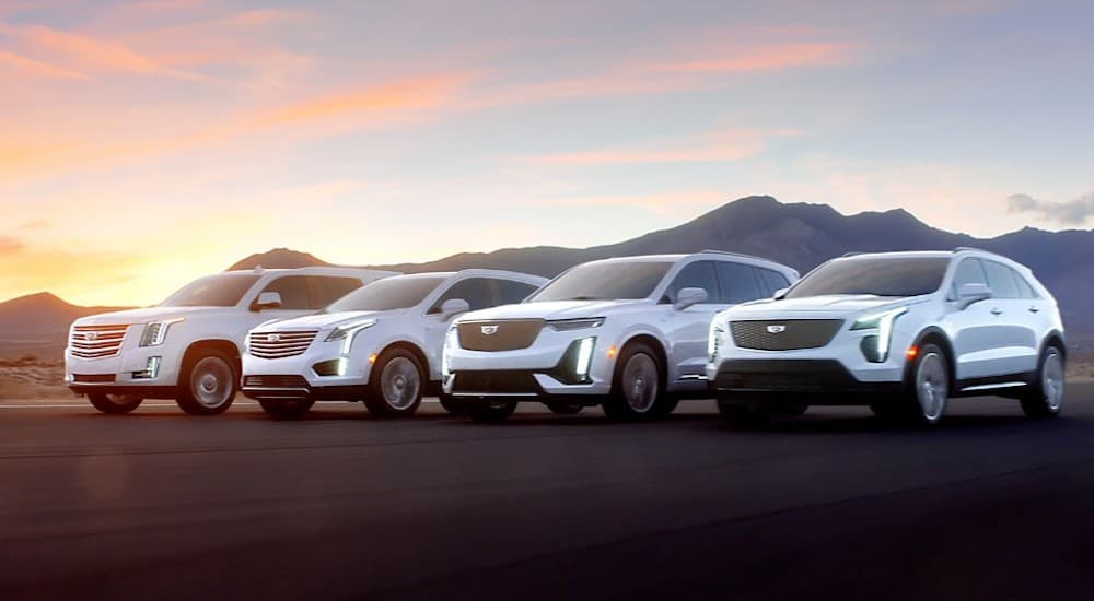 "The Cadillac XT4, XT5, XT6 and Escalade are shown at sunset in an image titled ""Rise""."