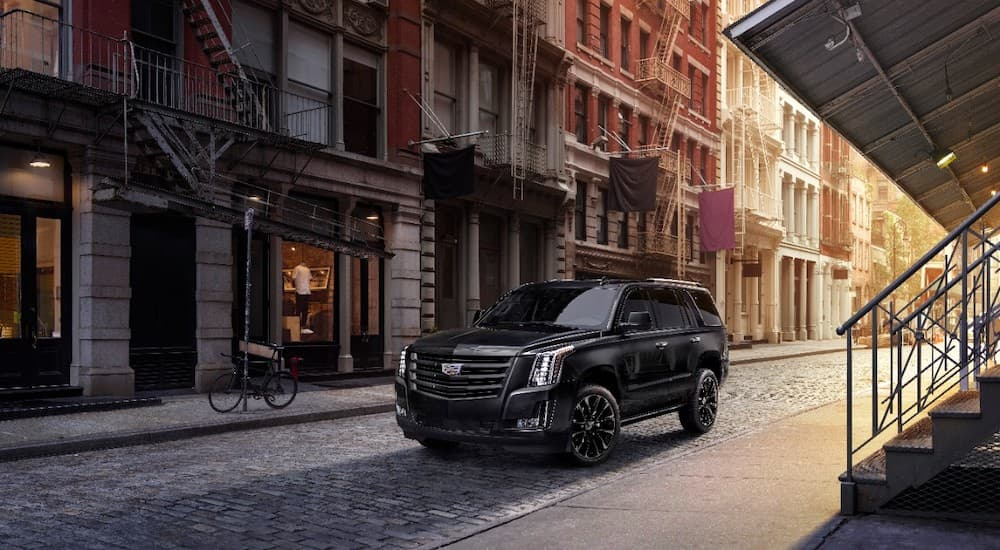 A black 2019 Cadillac Escalade, popular among Cadillacs for sale, is parked on a city side street.