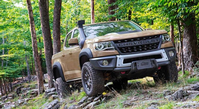A tan 2021 Chevrolet Colorado ZR2 Bison is driving through the woods.